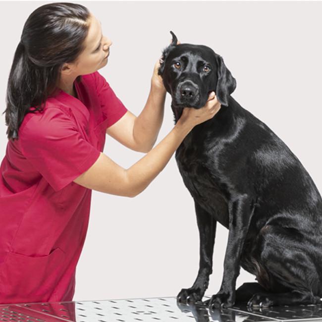 Ameliorează simptomele cistitei cu remedii naturale - Doza de Sănătate